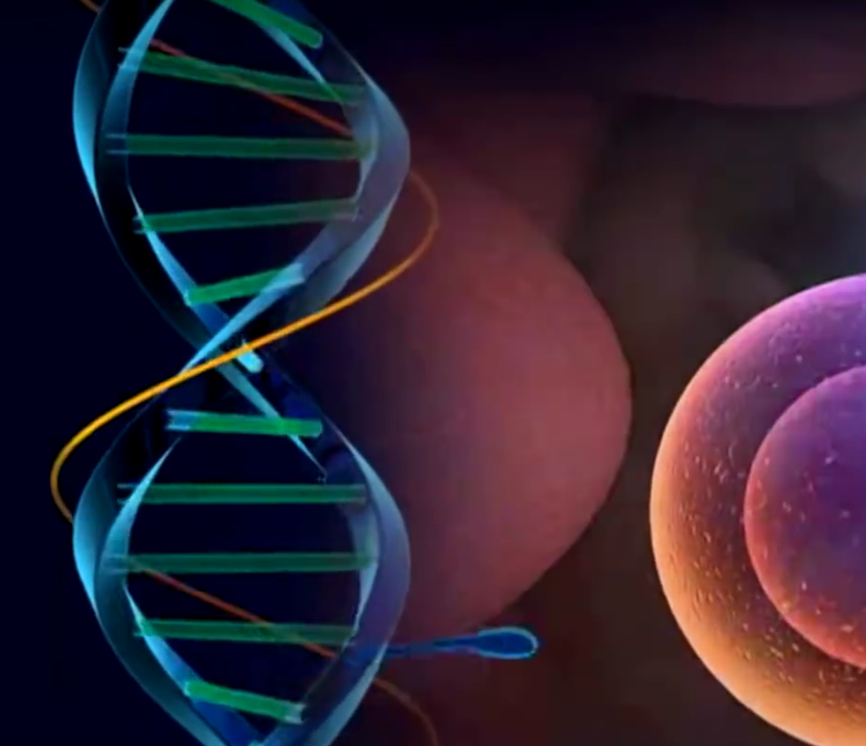 cellular structures and DNA